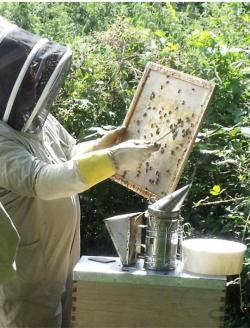 Scolton Manor - Pembrokeshire Beekeeping Centre